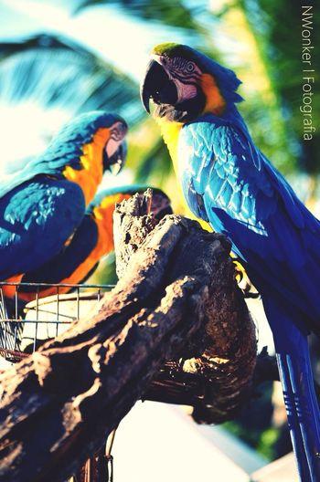 The EyeEm Facebook Cover Challenge Animals Birds Nature