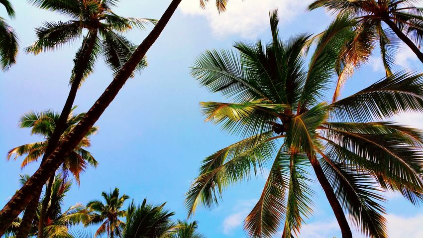 Wish i was here Hawaii Hawaiishots Hawaiian Style Beach Life Is A Beach Palm Trees Palmeras Nature_collection Nature Photography Beachphotography