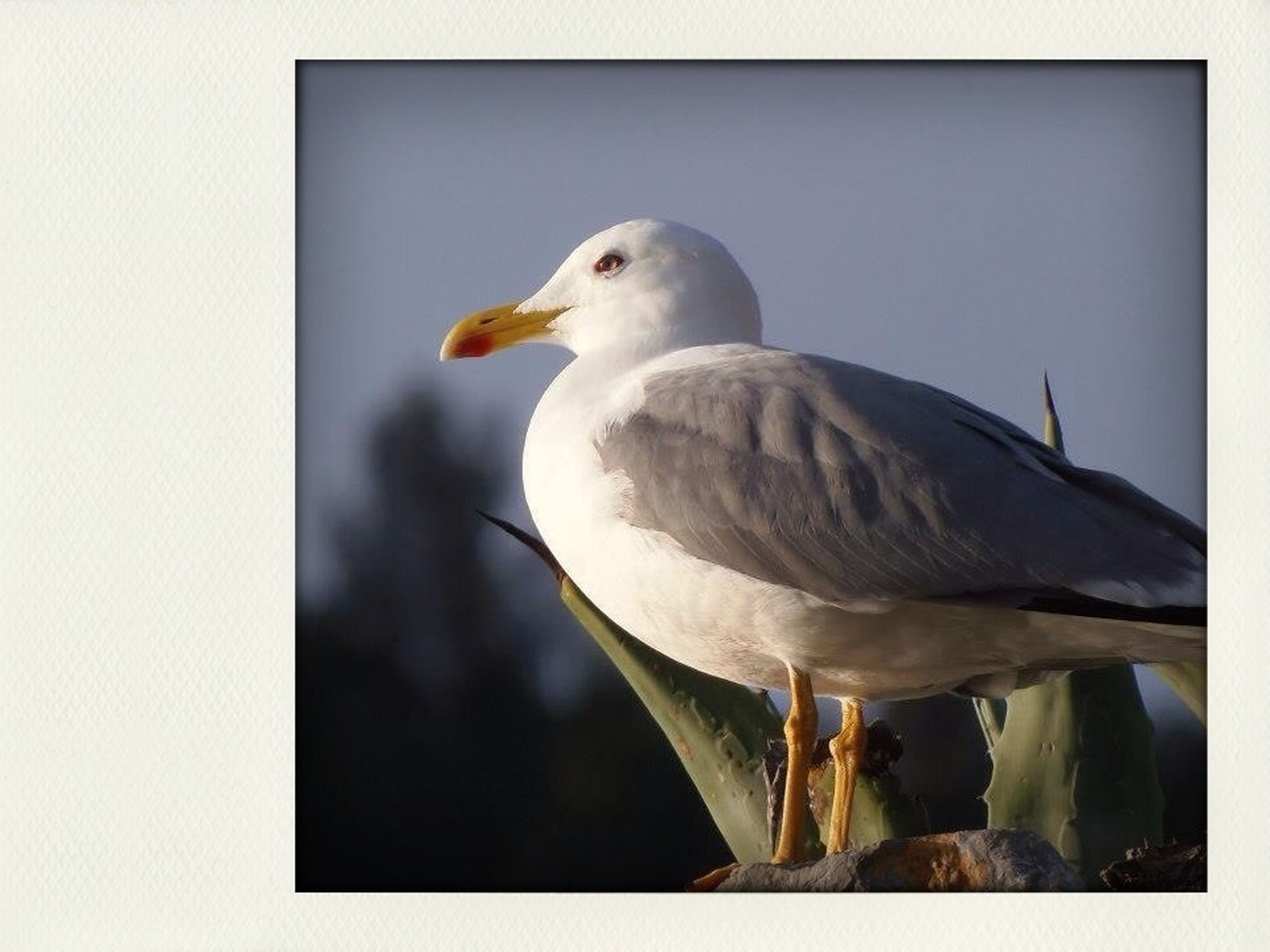 animal themes, bird, animals in the wild, wildlife, one animal, transfer print, seagull, auto post production filter, perching, beak, zoology, full length, side view, white color, vertebrate, close-up, nature, clear sky, no people, day