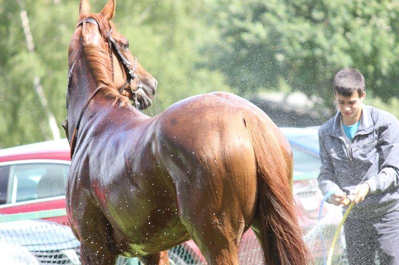EyeEm Selects Washing One Animal Cleaning Wet Outdoors Day Men Leisure Activity Water Nature One Person Horse Washing A Horse Rennbahn Raffelberg Mülheim An Der Ruhr