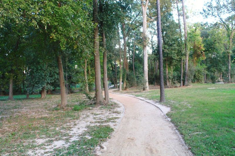 Tree Outdoors Nature Tranquility Grass The Way Forward Landscape Road Forest No People Beauty In Nature Day Pathway Park