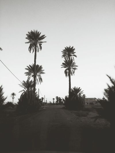 Trees Palm Tree Morocco Rissani Trees Outdoors Beauty In Nature No People Nature Artphotography