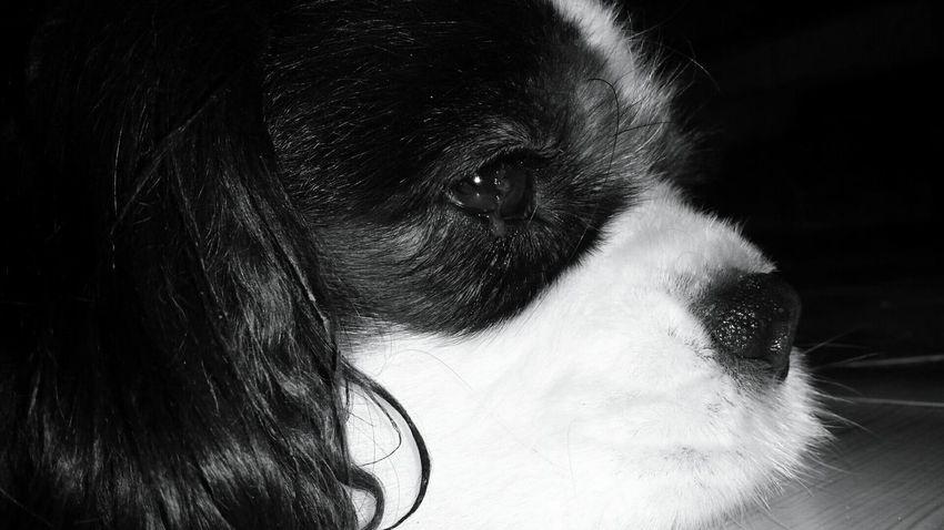 Artist Dog Blackandwhite Animals <3 <3