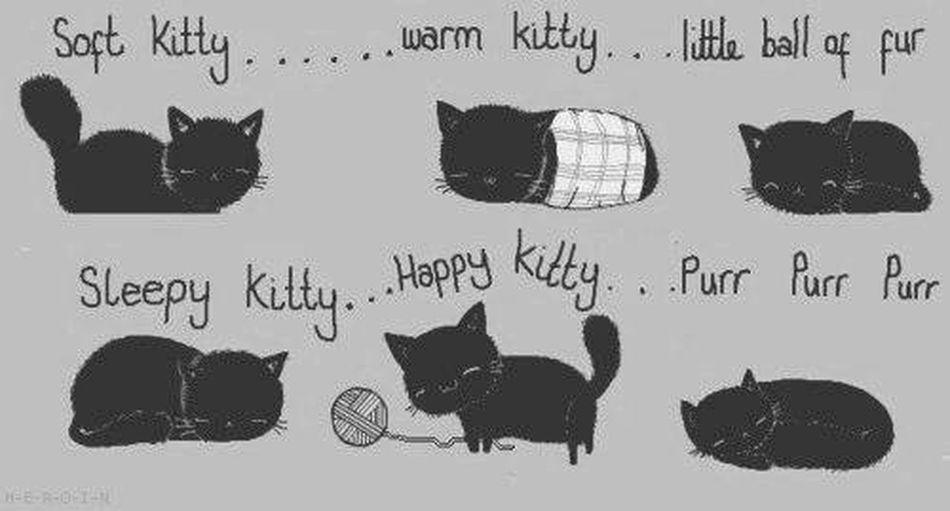 The Bing Bang Theory Cat Song