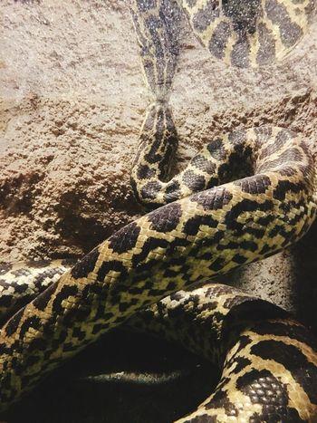 Water Animal Themes Snake Zoophotography Zoo Animals  Zoo D'amneville Vivarium