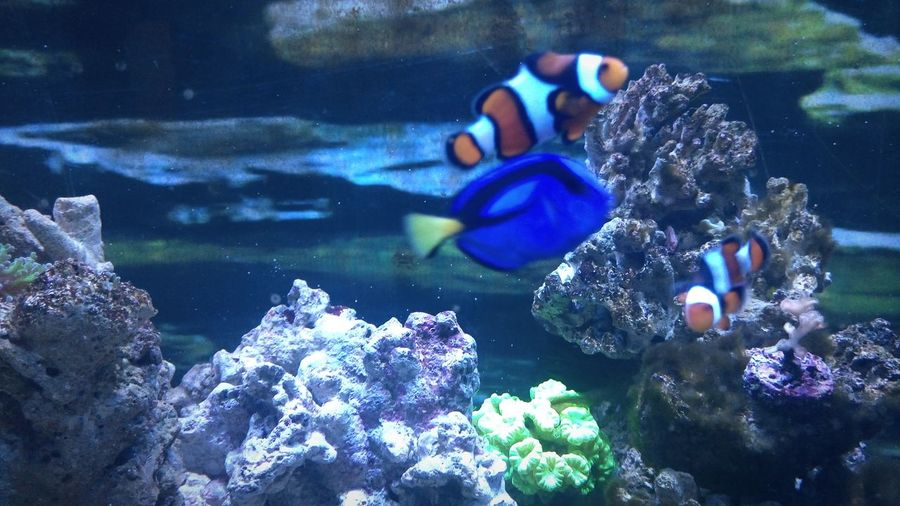 Sound of water,looking at fishes under a neon light truely amazing! Fishes 🐠 Water Check This Out Neon Lights Calmness Live Rock Background Finding Nemo Tank Water Fishtank