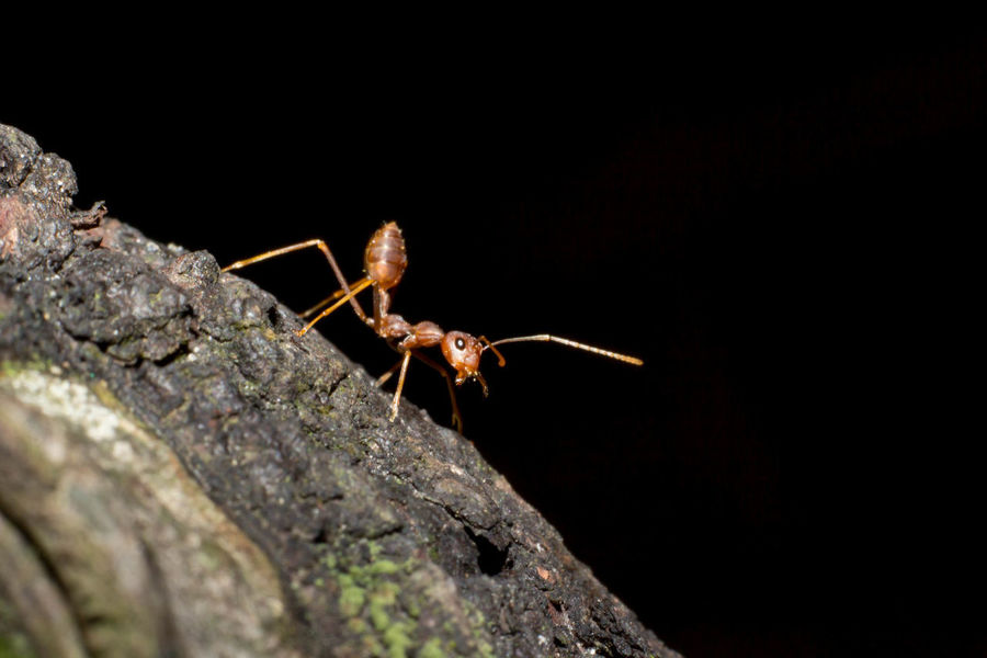 EyeEm Nature Lover Tree Animal Antenna Black Background Close-up Insect Nature Outdoors Selective Focus