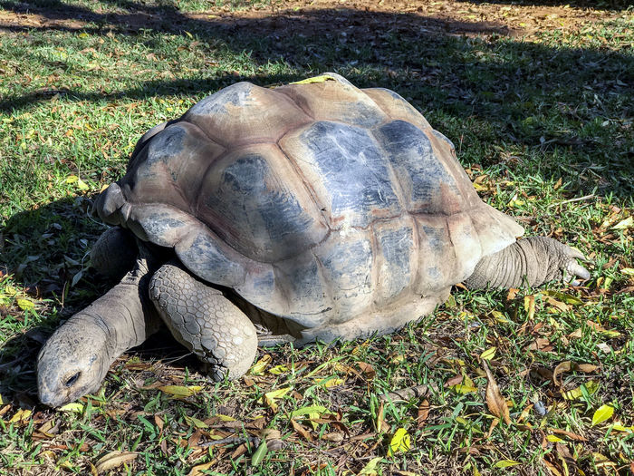Tortoise. Animal Animal Shell Animal Themes Animal Wildlife Animals In The Wild Day Field Grass High Angle View Land Nature No People One Animal Outdoors Plant Reptile Shell Sunlight Tortoise Tortoise Shell Turtle Vertebrate
