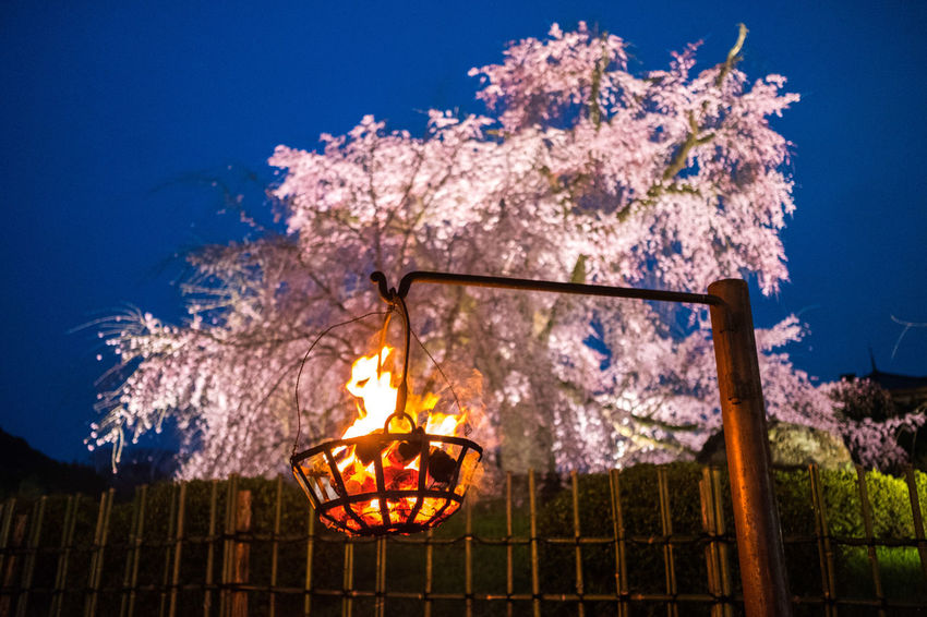 Find what lights your fires. #cherryblossom #japan #kyoto #sakura #spring #travel First Eyeem Photo