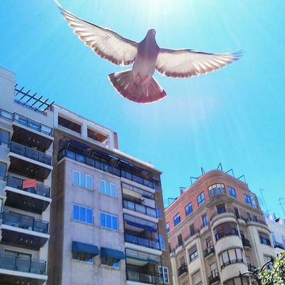 Oufarkha Fly Bird Free Libertad Libre Paloma Canada València Marrakech Photogrid Photo Instamood VSCO Huawei Roma Love TBT  Cool Model Vscocam Sea Morocco Instagram Instagrames me i my