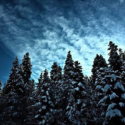 Winter is back... Utah Utahgram Ig_utah Igutah_801 awesome fall westernlandscapes winter beautiful snow trees