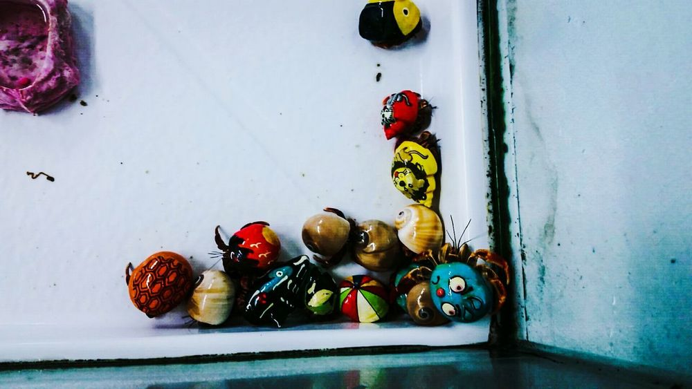 Variation Indoors  No People Multi Colored Close-up Hermit Crabs Painted Shells Cute Pets Animals