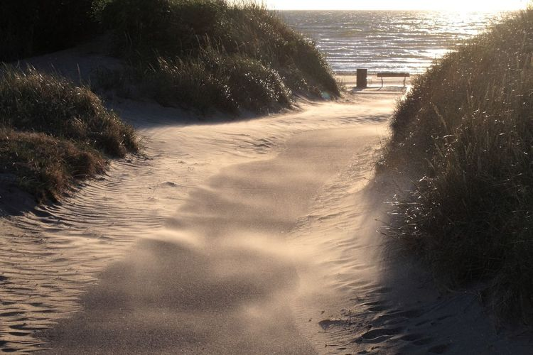Beach Day Direction Evening Footpath Land Motion Nature No People Outdoors Plant Sand Scenics - Nature Sea Sunlight Sunset The Way Forward Tranquility Tree Water Wind