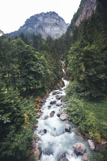 Beauty In Nature Plant Tree Scenics - Nature Water Mountain Nature Forest Tranquility Rock No People Day Land Tranquil Scene Non-urban Scene Motion Flowing Water Growth Solid Flowing Outdoors Stream - Flowing Water Lauterbrunnen Lauterbrunnen Valley River