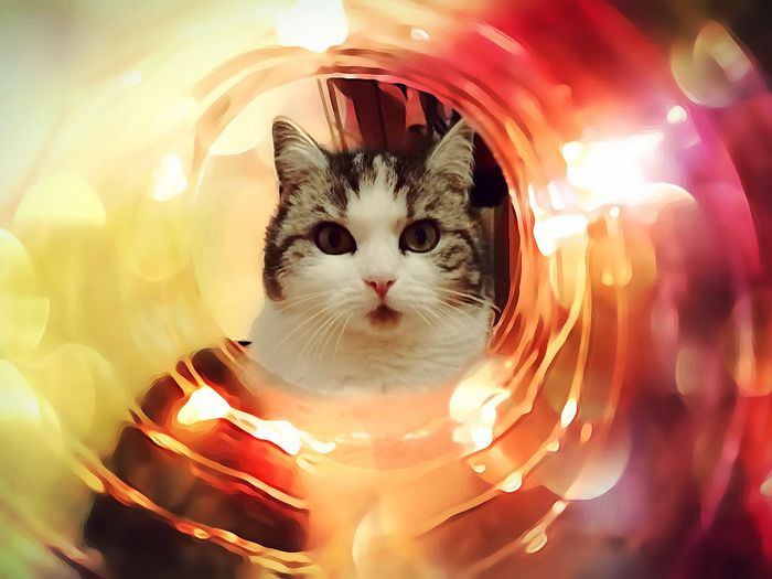 Close-up portrait of cat with illuminated lights