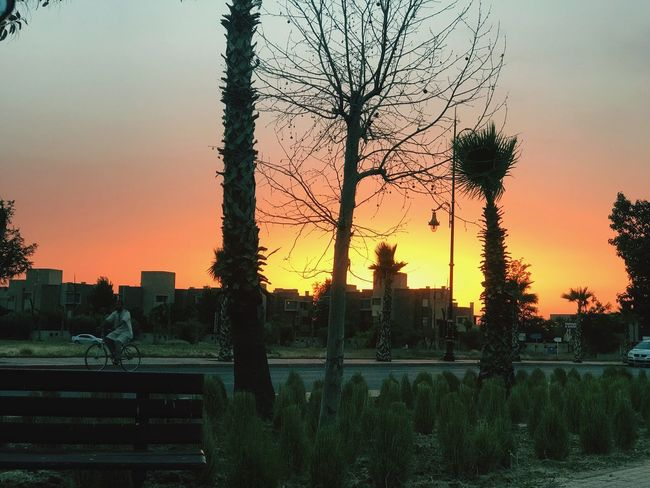 Tree Sky Plant Sunset Nature Silhouette Architecture Outdoors City Tranquility Beauty In Nature