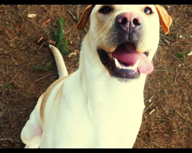 My lovely dog 😍👌💋 Lovely Doggy Summer Dogs