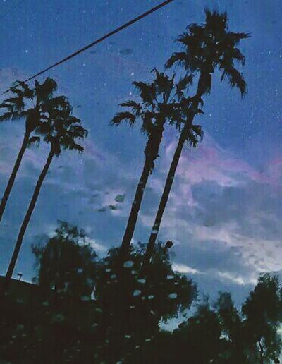 Tree Night Sky Blue Low Angle View