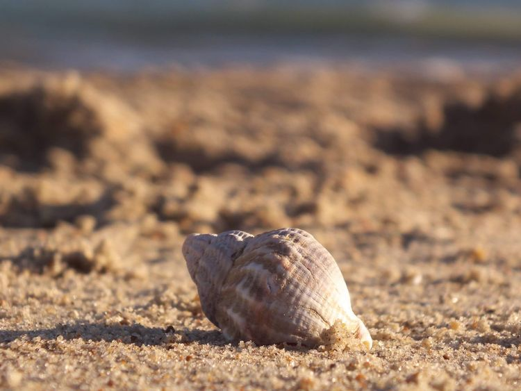 Seashells on the sea shore 🌊🐚 Macro Beauty Macro Photography Macro Photooftheday Photography Praia Praya Beachphotography Beach EyeEm Selects Sand Beach Day Animal Themes Outdoors No People Nature Animals In The Wild Close-up Hermit Crab Sea Life Beauty In Nature