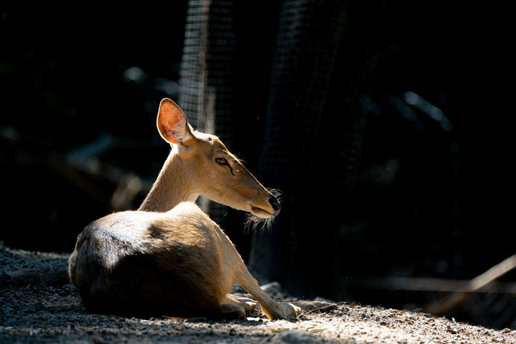Deer relaxing outdoors