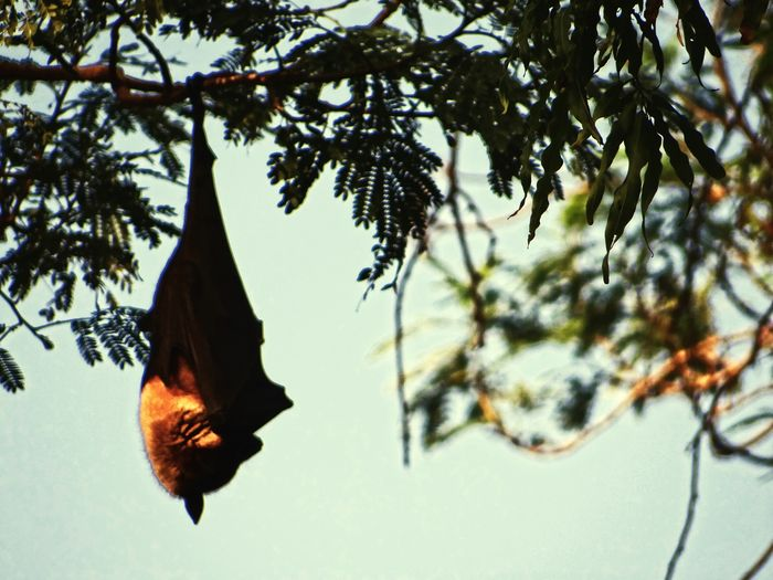 Bat Tree Bat On