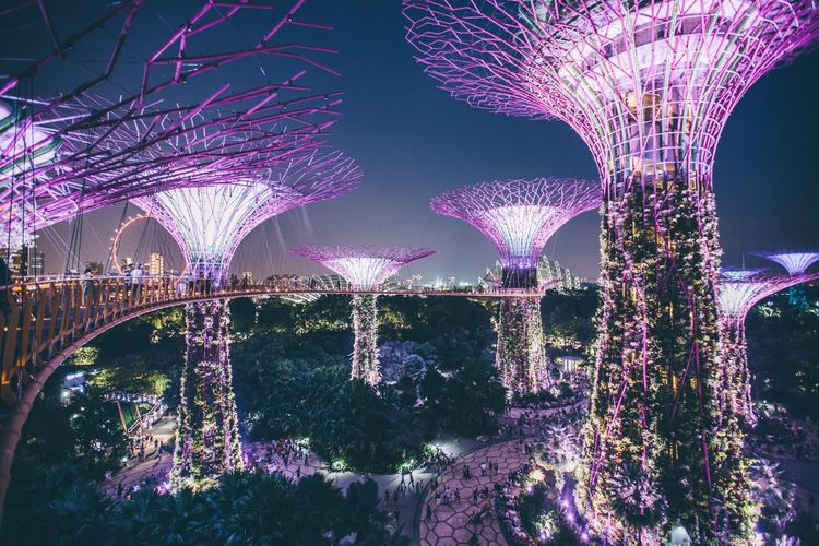 Singapore Night Illuminated Plant Tree Nature Lighting Equipment No People Decoration Sky Celebration Electric Light Built Structure