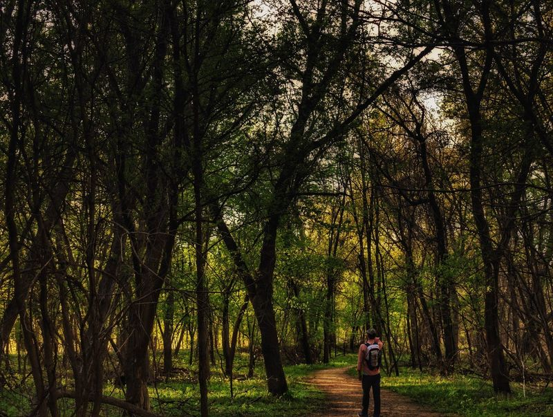 Lost in the enchanted forest... Tree Nature Forest Backpack Outdoors Walking Day Growth Tranquil Scene Hiking Tranquility Beauty In Nature Scenics Exploration Explore Landscape Woods Green Path Trail Springtime Wanderlust Park The Great Outdoors - 2017 EyeEm Awards