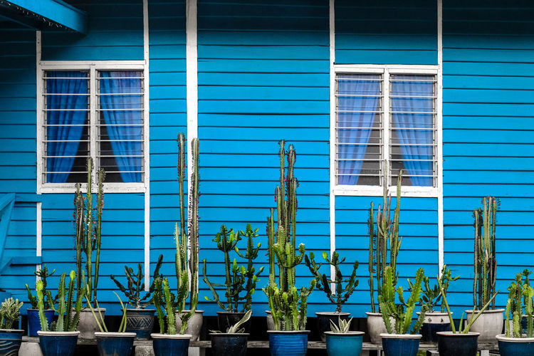 Potted plants outside building against window