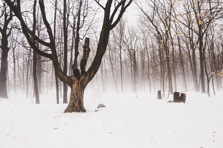 Scenic Winter white landscape background with fog rolling through trees in a forest on a hiking path Early Morning Fog Foggy Day Dark Nature White Snow Winter Bare Tree Tree Winter Nature Snow Branch Cold Temperature Tranquility Tree Trunk Beauty In Nature Landscape Outdoors No People Scenics Day