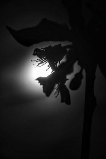 EyeEm Best Shots - Black + White Macro Silhouette Shadow Tree Plant Leaf Nature Plant Part Sunlight Close-up Sky