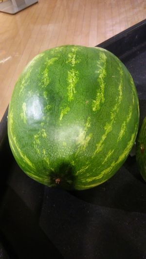 fruit, water melon, round, cirle, fresh, green color, big, Mall Store Farmers Market For Sale Nutritious Fruit Water Close-up Green Color