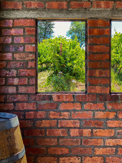 Trees and brick wall by window