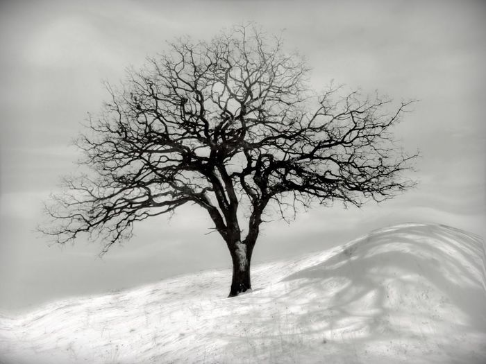 One tree hill. Shot this a few weeks ago after our first snow storm. I'm happy to report no snow. Though a little of the white stuff on Christmas Day would be festive. Snowy Tree IPhoneography Bw_collection Canadian Winter
