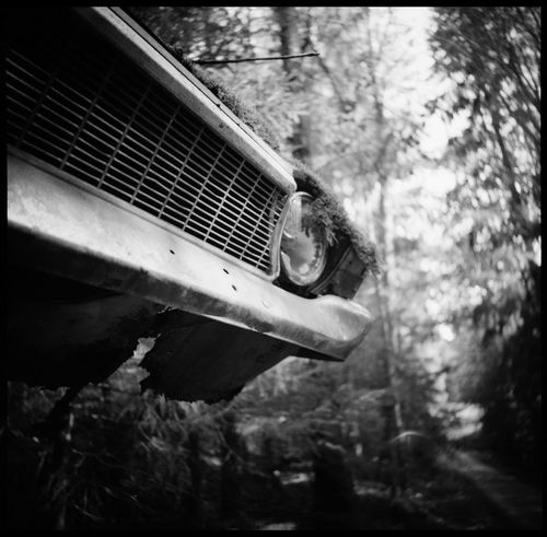 The eerie beauty of the car cemetery of Båstnäs Abandonded Car Cemetery Analogue Photography Black And White Båstnäs Båstnäs Car Cemetery Båstnäs Töcksfors Car Cemetery Cars Cars And Art Cars And Nature Forrest Leaves Life Moss No People Outdoors Scandinavia Schrottplatz Scrap Metal Summer In Sweden Sweden Technology Travel Vintage Vintage Cars The Photojournalist - 2017 EyeEm Awards The Great Outdoors - 2017 EyeEm Awards