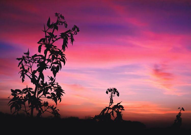 Trifauna Sunset