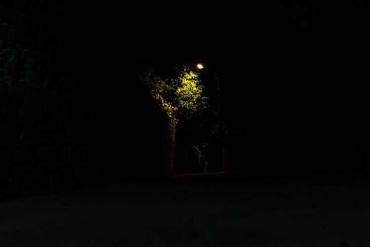 Silhouette trees against illuminated lights at night