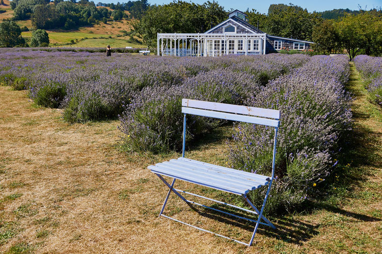 Lavender House... Plant Seat Built Structure Architecture Nature Chair Grass Building Exterior No People Front Or Back Yard Day Growth Land Bench Building House Field Outdoors Tree Empty Purple Park Bench Lavender Scenics Tourism