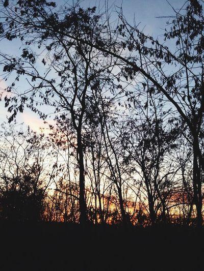 Tree TreePorn Sunny Day Winter Spring In Winter