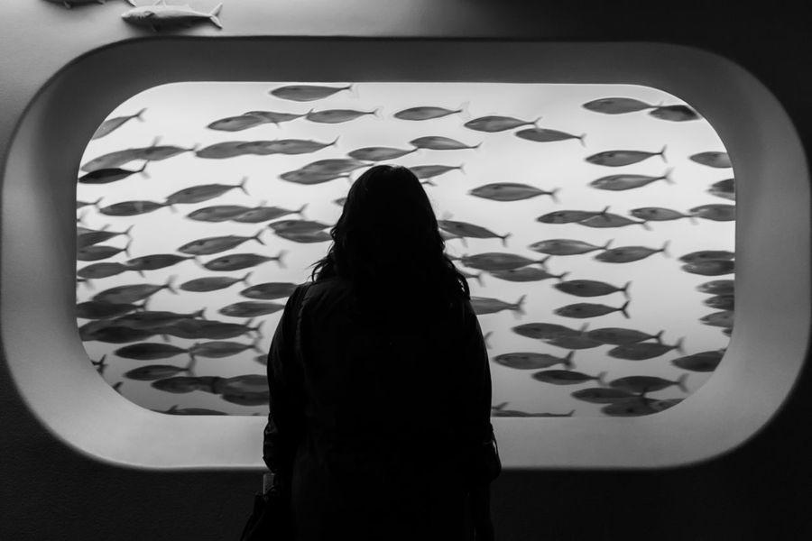 Aqua Aquarium Aquarium Life Aquatic Deep In Thought Deep Thinker EyeEm EyeEm Best Shots EyeEm Gallery Indoors  Rear View Sea Life Sea Life Aquarium Showcase: January Silhouette The Week Of Eyeem This Week On Eyeem Tranquil Tranquil Scene Tranquility Market Bestsellers 2017