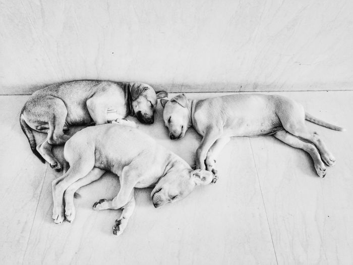 Puppies Animal Sleeping Dog Pets Indoors  Puppy Cute Pup Blackandwhite Animal Themes Google Pixel Pet Portraits My Best Photo