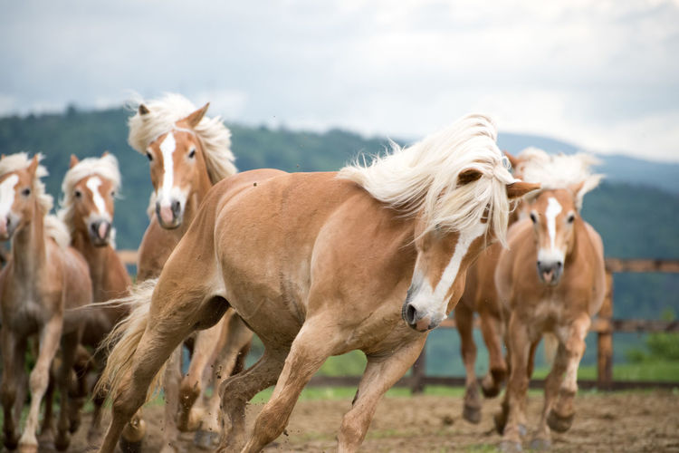 Horses running on field against cloudy sky