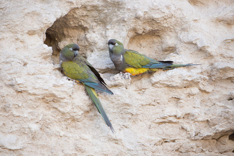Close-up of parrot perching on wall