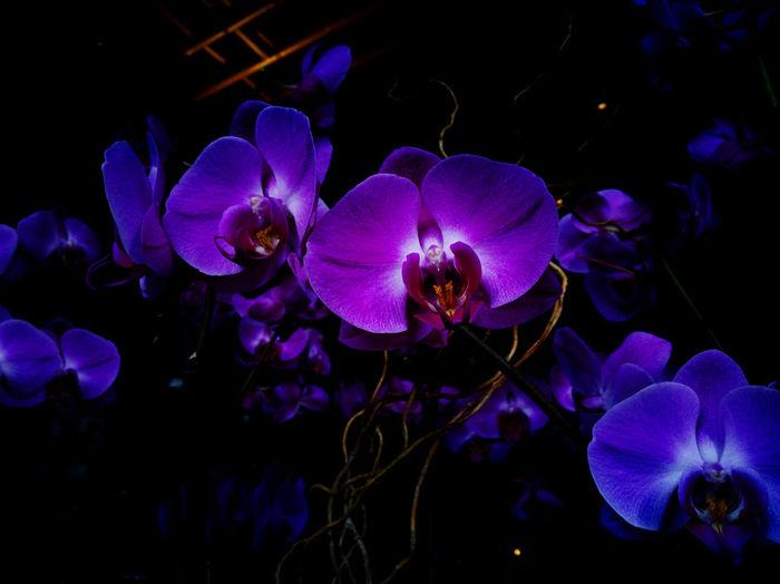 Huawei P9 Flowers