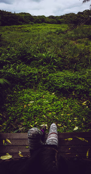 Adventures in the jungle Shoe Green Color Grass One Person Day Outdoors Low Section People Nature Adult Water Beauty In Nature Sky Lost In The Landscape Travel Destinations Tranquil Scene Full Frame Backgrounds Scenics Vacations Travel Cloud - Sky High Angle View Sunset Tranquility