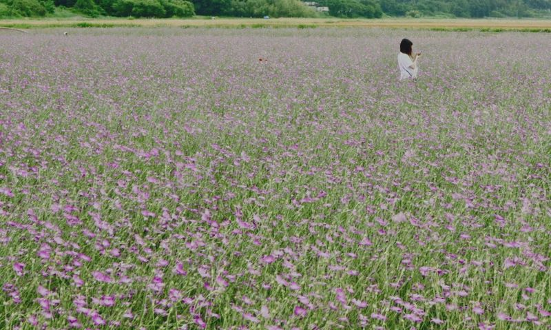 Pentax K-3 麦なでしこ 鴻巣ポピー・ハッピースクエア 鴻巣花まつり Plant Field Flower Flowering Plant
