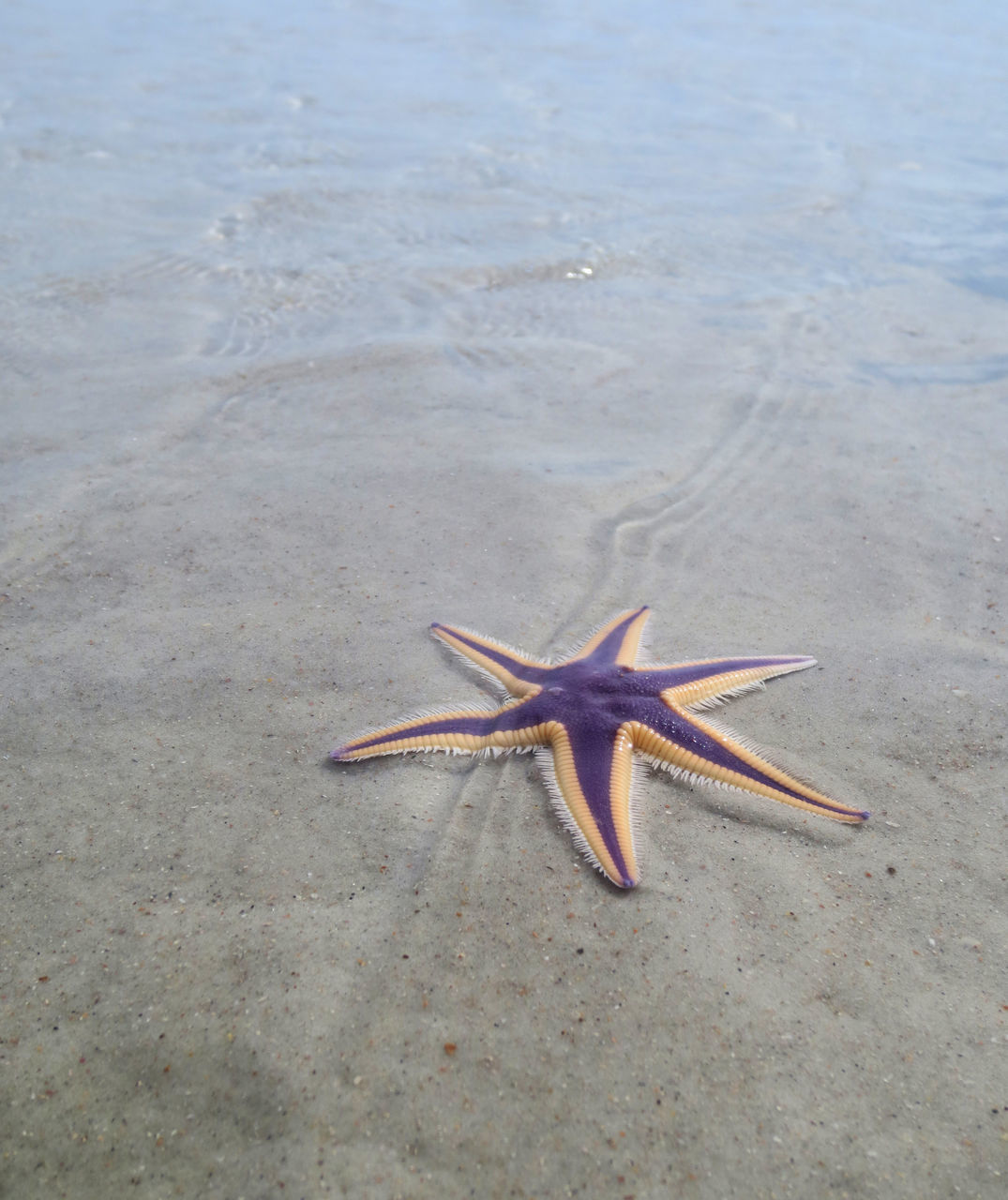 High Angle View Of Starfish At Beach