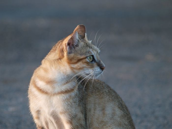 Cute Cats Photography Potrait Close-up Stray Animal Cat Animal Eye Eye