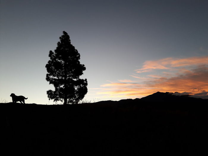 Silhouette Dog Standing By Tree On Landscape Against Sky At Sunset