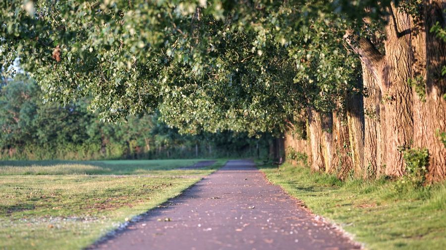 Still, I always enjoy being out in the early morning sunshine while almost everyone else is still sleeping. Peaceful Summer Tree Road Rural Scene Grass Landscape Plant Empty Road The Way Forward Asphalt Treelined Straight Pathway