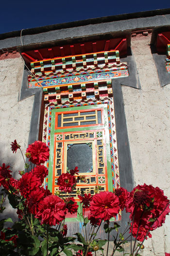 Colourful window of the Palcho Monastery in the morning with the flowers, Gyantse, Tibet, China Architecture Building Exterior Built Structure City Colourfull Day Flower Monastery No People Outdoors Palcho Monastery Red Sky Sunny Tibetan Buddhism Tibetan Culture Tradition Travel Travel Destinations Window